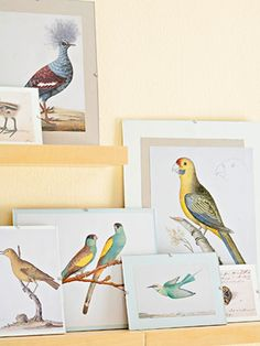 """Classic bird prints add flair to any room. Use pages from a vintage book for an authentic look. Choose images that have at least one common hue to create the perfect display. Mat illustrations backed with solid-color scrapbook paper in clip-edge frames."""