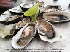 Should Oyster Farmers Use Neonicotinoids?