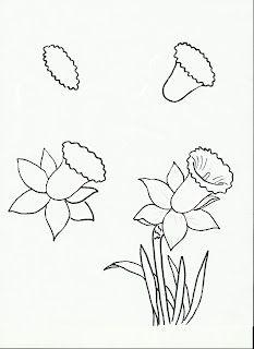 daffodil sketch