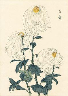 長谷川契華 Keika Hasegawa 『契花百菊 白竜』Keika Hasegawa Chrysanthemum Wood Block Prints 1st Edition 1893