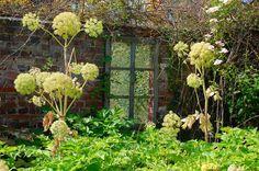 Jardin Plume - Le Thil