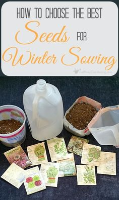the best seeds to winter sow