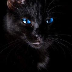 :) <3 nice blues