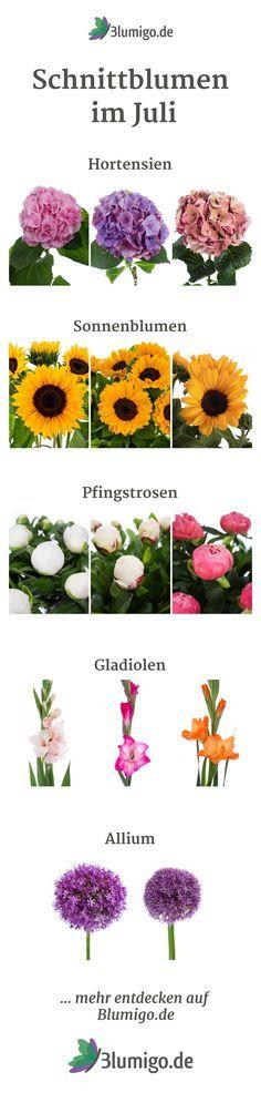 Welche Blumen gibt es im Mai? Schnittblumen Saison-Kalender ...
