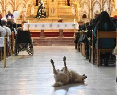 Stray dog wanders into church as priest prays for children with cancer-slide1