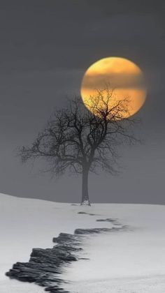 Photography Discover Winter snow moon Source by Moon Pictures Nature Pictures Moon Pics Moon Photography Landscape Photography Afrique Art Shoot The Moon Moon Painting Beautiful Moon Lake Pictures, Moon Pictures, Nature Pictures, Moon Pics, Beautiful Nature Wallpaper, Beautiful Moon, Beautiful Landscapes, Moon Photography, Landscape Photography