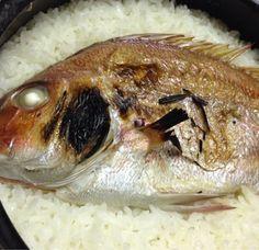 鯛飯 軽く塩焼きした鯛を、昆布に乗せて、土鍋でご飯を普通に炊いただけです。