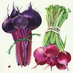 Mary Woodin Watercolour Illustration  Just discovered these wonderful watercolors