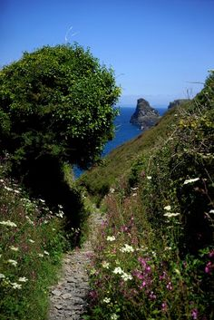 Path to Bossiney Haven---oh, how I wish I could walk on this path..... happily, dreams are free.