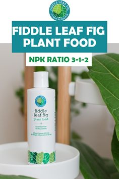 Created by the Fiddle Leaf Fig Plant Resource Center with the correct NPK ratio of Promote healthy growth of new leaves in your fiddle leaf fig with this specific fertilizer made just for fiddle leaf fig plants. Fig Tree Plant, Fiddle Leaf Fig Tree, Fiddle Fig, Liquid Fertilizer, Spider Plants, Ficus, Outdoor Plants, Plant Care, Houseplants