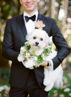 Wedding puppy: http://www.stylemepretty.com/2015/06/12/traditional-romantic-berkshire-wedding/   Photography: Heather Waraksa - http://heatherwaraksa.com/