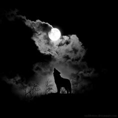 When I'm alone, howling at the moon. Is it the right moon though. It's not a blood moon. All is good.