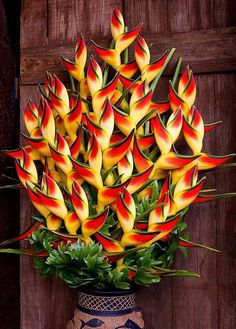 What a beautiful flower! Great for a patio planter!