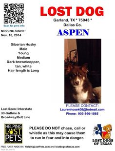 "#Lostdog 11-18-14 ""Aspen"" #Garland #TX #SiberianHusky male Brown/Copper/Tan/White 903-366-1565 LAUREN CHESTER LOST AND FOUND HUSKIES OF THE US https://www.facebook.com/huskydogslostfound/posts/877365102294837"