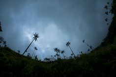 Valle del Cocora, Salento, Colombia I've been there in February, and I want to come back :) Cali, Where To Go, South America, February, Places To Visit, Country, Amazing, Plants, Gift