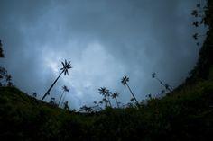 El Valle del Cocora cuenta con palmas de cera, conocido por ser el árbol nacional de Colombia, con más de 60 metros de altura. Este lugar es mágico porque aunque por la altura la nebilan siempre está presente, los rayos de luz tratan de sobrepasarla y generan un efecto muy lindo