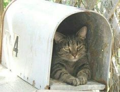 """More evidence in the phenomena of """"Cats and Boxes."""" Only this time it's a mailbox! LOL!"""