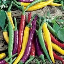 Chili Pepper Rainbow Pack 4 Varieties DBP002 (Multi Colored) 100+ Open Pollinated Seeds by David's Garden Seeds David's Garden Seeds http://www.amazon.com/dp/B017UVHYOQ/ref=cm_sw_r_pi_dp_-NYIwb17MRFKV