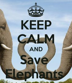 keep-calm-and-save-elephants-8.png (600×700)