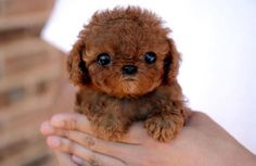 We came across this photo out there on the web. Anyone have any idea what breed this little bundle of joy is?