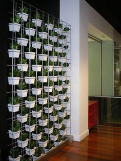 Jazz up your office walls. See more vertical garden ideas www.greendesign.com.au