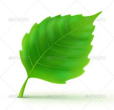 Green Detailed Leaf  #GraphicRiver         Vector illustration of cool green detailed leaf     Created: 12July12 GraphicsFilesIncluded: JPGImage #VectorEPS Layered: No MinimumAdobeCSVersion: CS Tags: art #beauty #color #concept #design #element #environment #environmental #foliage #graphic #green #healthy #herb #herbal #icon #illustration #isolated #leaf #life #logo #nature #object #plant #shiny #sign #simplicity #single #spring #symbol #vector