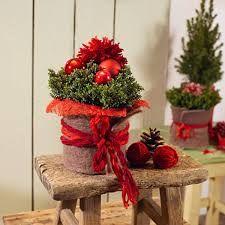 Risultati immagini per weihnachtstrends 2017 floristik