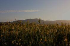 Mayacamas Range at Dusk