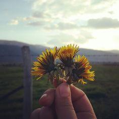 Gün hep güzel çiçekler de