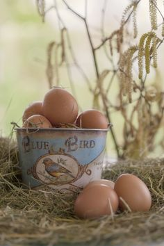 Brown eggs in blue bird bucket - on the farm Country Charm, Country Life, Country Girls, Country Living, Country Roads, Down On The Farm, Color Pallets, Colour Schemes, Color Combos