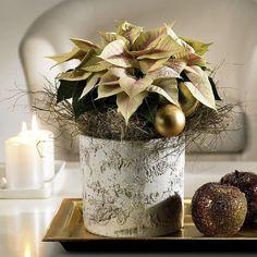 –Tässä ajassa, tänä jouluna suosin puhtautta ja yksinkertaisuutta. Kasvit saavat nousta pääosaan, menestynyt floristihortonomi Jouni Seppänen paljastaa joulukukkatrendit. –Valkoinen nousee pääosaan, joukossa vilahtaa myös pinkki. Teräs tuo kiiltoa.