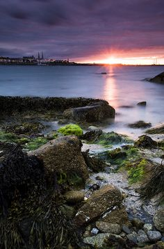 Mossy Rocks, Sandycove, Dún Laoghaire, County Dublin, Ireland by jogorman, via Flickr