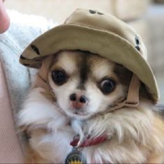 I want a hat for Toby!