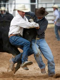 "COWBOY RODEO--Cowboys from the region's cattle ranches take part in the wild cow milking competition at the annual Ranch Hand Rodeo in Randolph, Utah, August 29, 2009. Workers from various ranches in the region battle for bragging rights in the event many call one of the few ""true cowboy"" experiences left in the west."