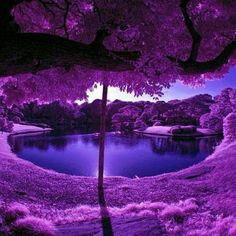 Purple Scenery at a Japanese Garden ♥ Photo: ツ Amazing Facts & Nature ツ Purple Love, All Things Purple, Purple Rain, Shades Of Purple, Purple Trees, Purple Flowers, Purple Stuff, Deep Purple, Purple Thoughts