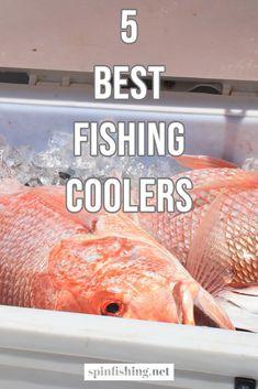 Sup Fishing, Sport Fishing, Best Fishing, Saltwater Fishing, Fishing Reels, Topwater Lures, Salt Water Fish, Soft Bait, Largemouth Bass