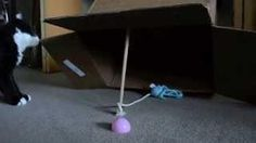 How To Trap A Domestic #Cat - #funny