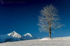 Belianske Tatras in winter.