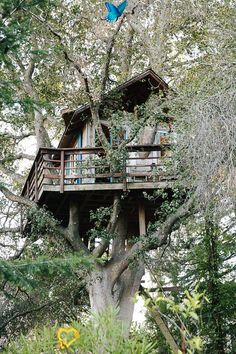 About A Place: San Francisco Treehouse rad treehouse / The Green Life <3<br>