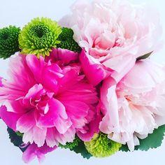 Bloom. 🌸  .    #love #bloom  #flowers  #flowergirl #feelfreefeed  #flowergram #flashesofdelight