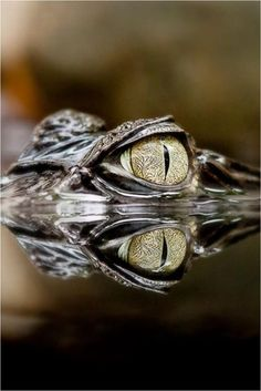 :::: PINTEREST.COM christiancross ::::Crocodile eye  +++ HOW MANY EYES ?  PERISCOPE