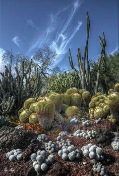 Desert Garden at Huntington Library and Garden, San Marino CA