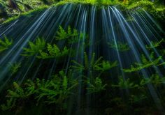 Maiden Shower   Eagle Creek   Columbia River Gorge   Oregon   Photo By Marc Adamus