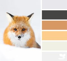 Creature Color - https://www.design-seeds.com/in-nature/creatures/creature-color-5