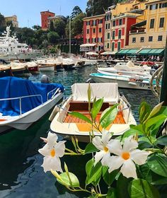Happy sunday!  #Portofino #Liguriasea #RedazioneMCinvacanza #MContheroad  via MARIE CLAIRE ITALIA MAGAZINE OFFICIAL INSTAGRAM - Celebrity  Fashion  Haute Couture  Advertising  Culture  Beauty  Editorial Photography  Magazine Covers  Supermodels  Runway Models