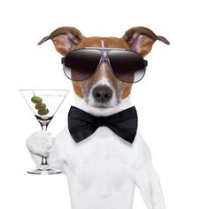 Happy birthday images with Jack Russell Happy Birthday Pictures, Happy Birthday Funny, Happy Birthday Messages, Happy Birthday Quotes, Birthday Memes, Geek Birthday, Birthday Cheers, Jack Russell Terriers, Birthday Wishes Greeting Cards