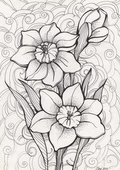 Narcisses Plus