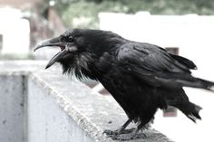 crows - Buscar con Google