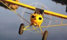 yellow-cub-m0a