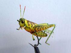realistic grasshopper